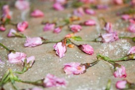 drying-cherry-blossoms-in-the-oven-2